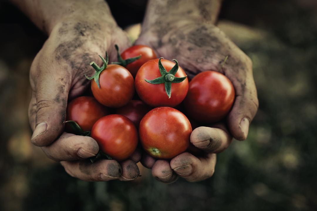 Lokaal-Biologische-groenten
